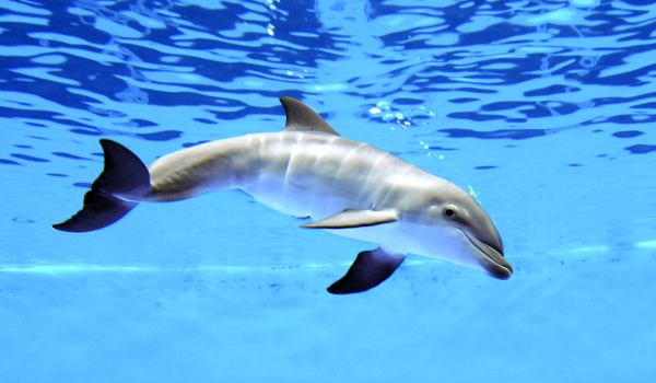 Фото: Дельфин афалина