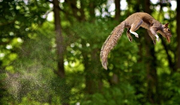 Фото: Белка летяга из Красной книги