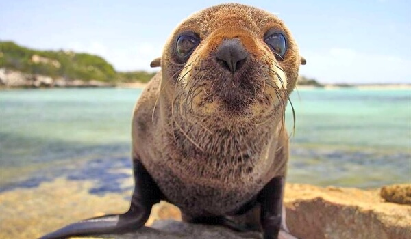 Фото: Морской лев в дикой природе