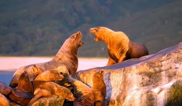 Фото: Животное морской лев