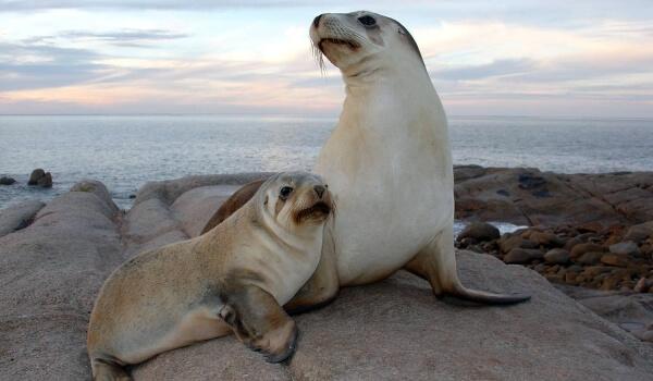 Фото: Морской лев