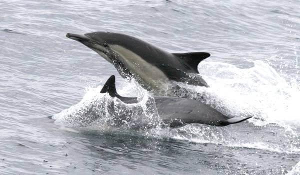 Фото: Красная книга беломордый дельфин
