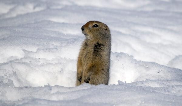 Фото: Евражка зимой