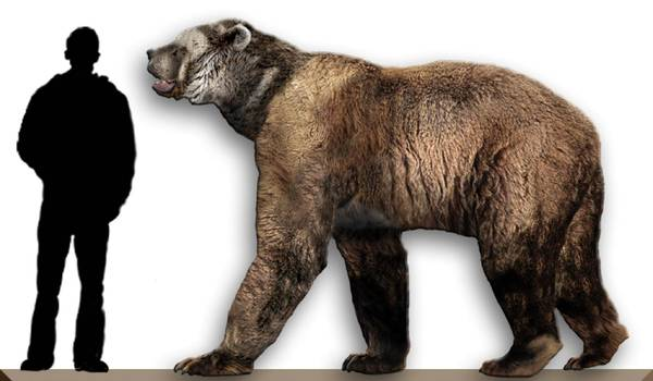 Фото: Гигантский короткомордый медведь