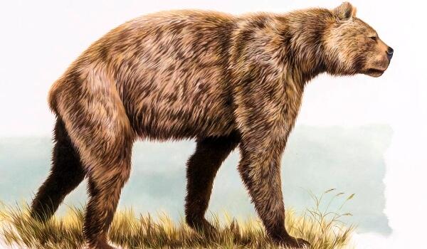 Фото: Доисторический хищник короткомордый медведь
