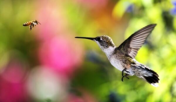 Фото: Птица колибри