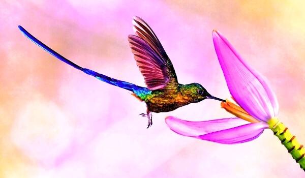 Фото: Маленькая птичка колибри