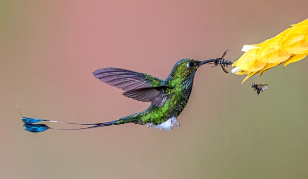 Фото: Колибри маленькая птица