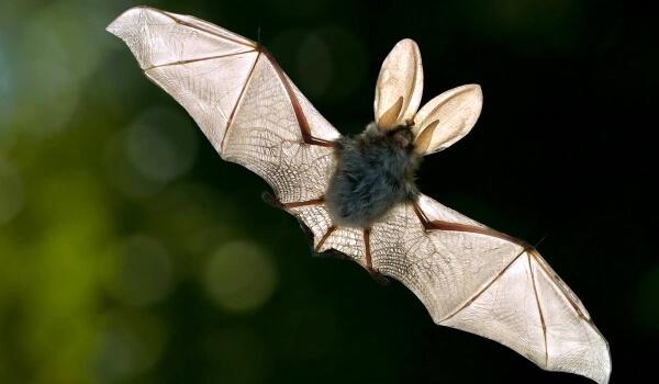 Фото: Полет летучей мыши