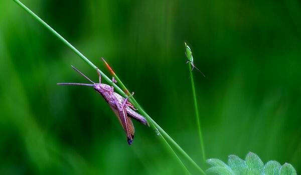 Фото: Сверчок в траве