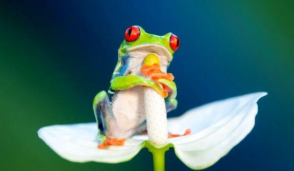 Фото: Древесная лягушка