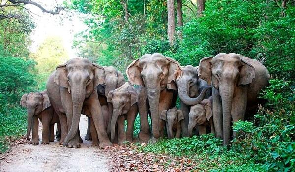 Фото: Индийские слоны