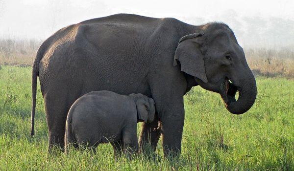 Фото: Детеныш индийского слона