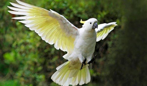 Фото: Большой попугай какаду