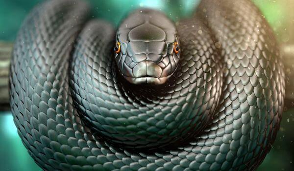 Фото: Ядовитая змея черная мамба