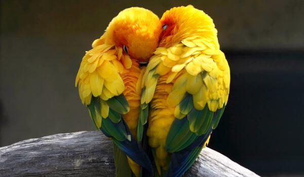 Фото: Птицы попугаи неразлучники