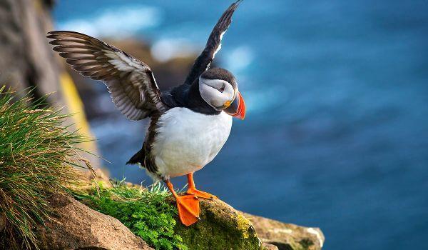 Фото: Птица тупик