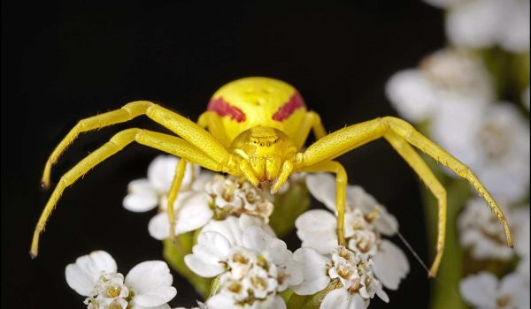 Фото: Большой жёлтый паук