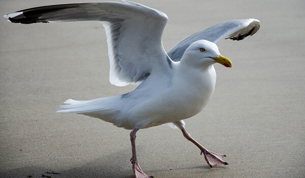 Фото: Белая птица чайка
