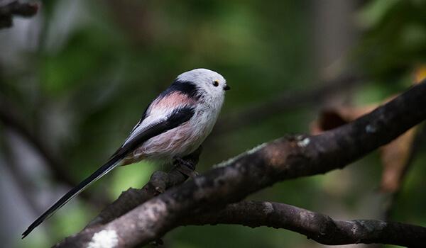 Фото: Птица ополовник