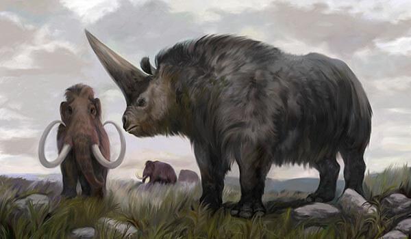 Фото: Носорог эласмотерий