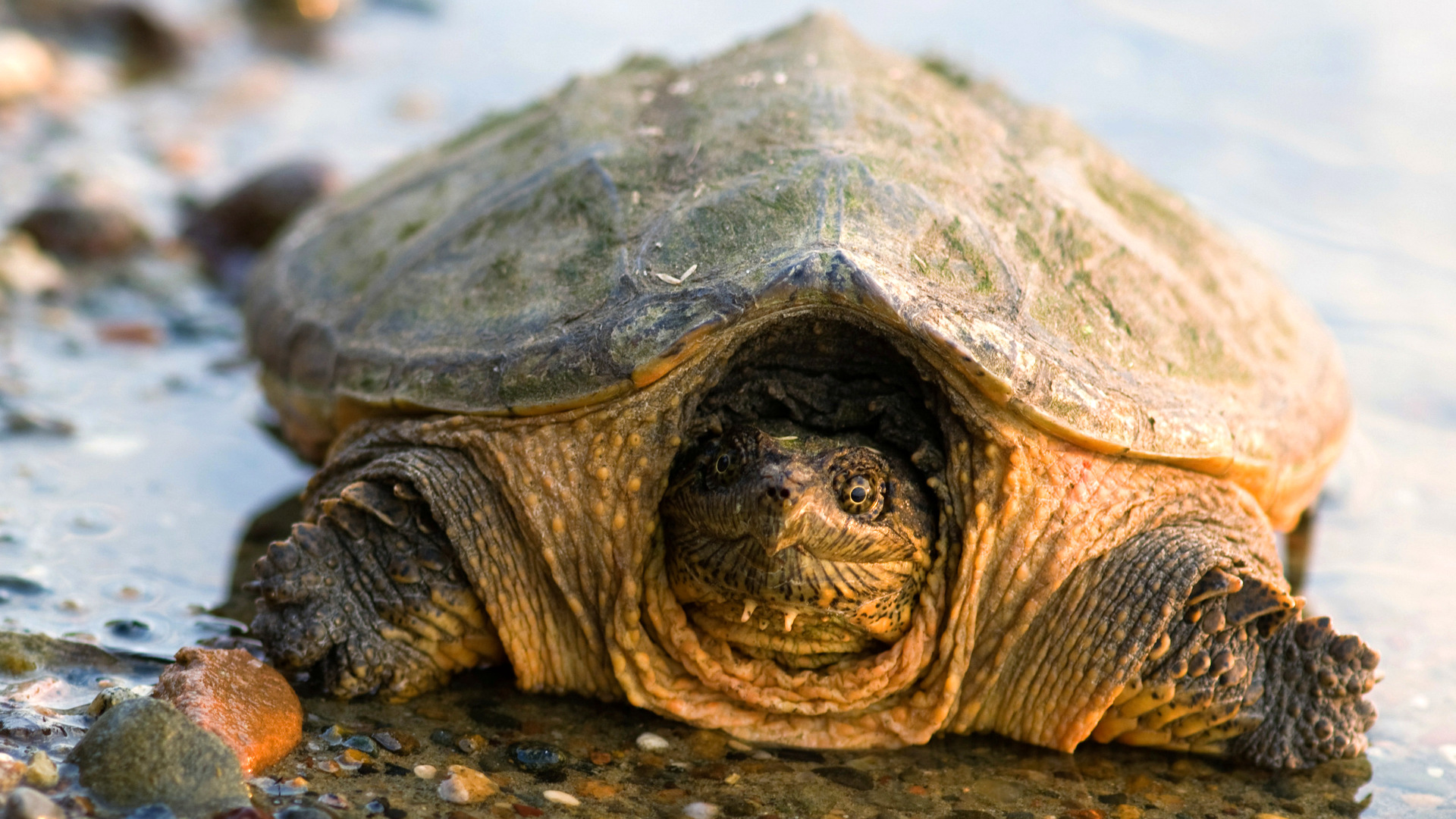 один враги черепах картинки выступать