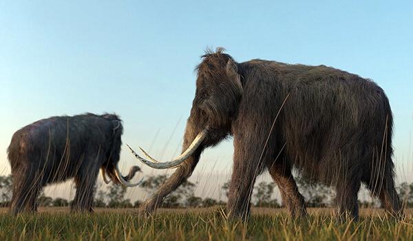 Фото: Шерстистый мамонт