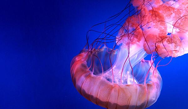 Фото: медуза в воде