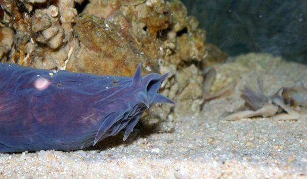 Фото: Морской червь миксина