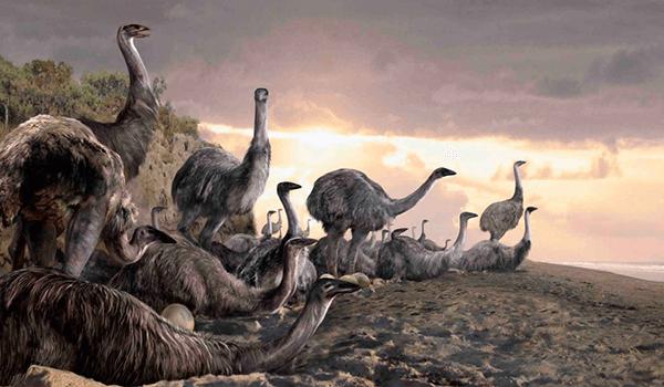 Фото: Вымершие птицы моа