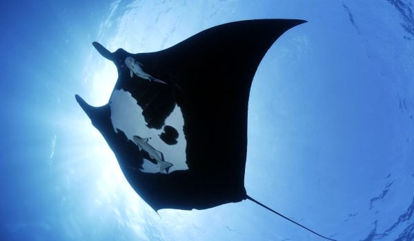 Фото: Рыба морской дьявол