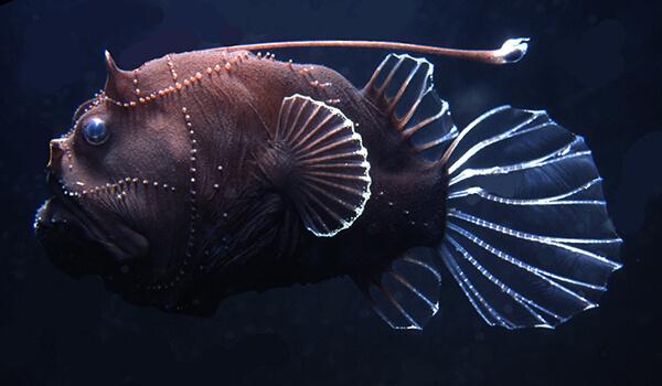 Фото: Морской черт
