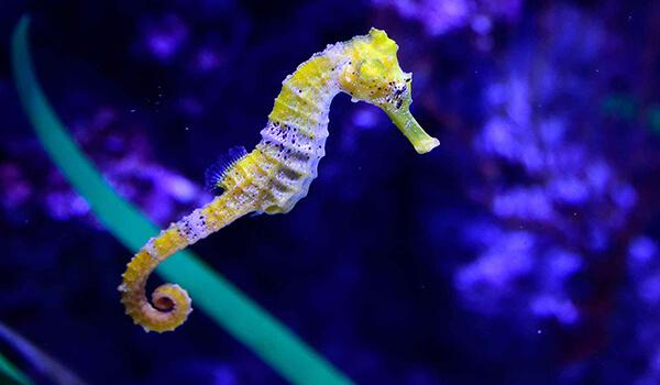 Фото: Как выглядит морской конек