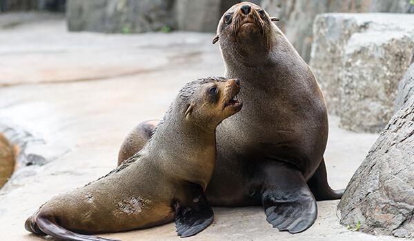 Фото: Морские котики
