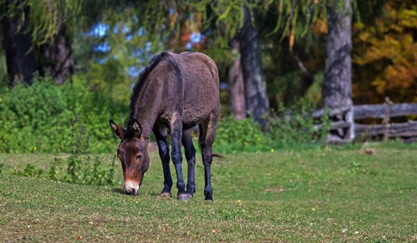 Фото: Животное мул