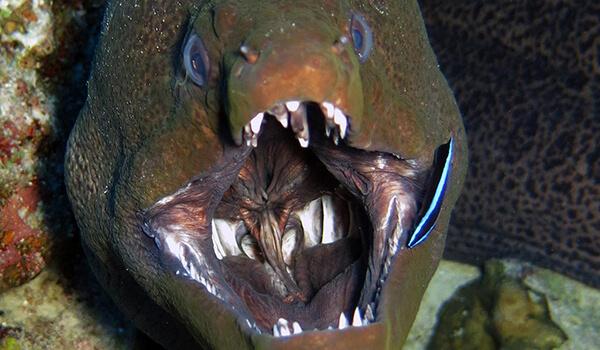 Фото: Рыба мурена