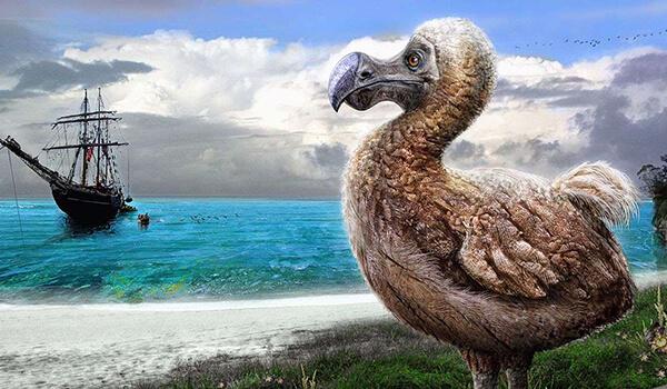 Фото: Птица додо, или дронт