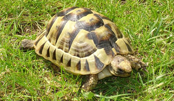 Фото: Большая сухопутная черепаха