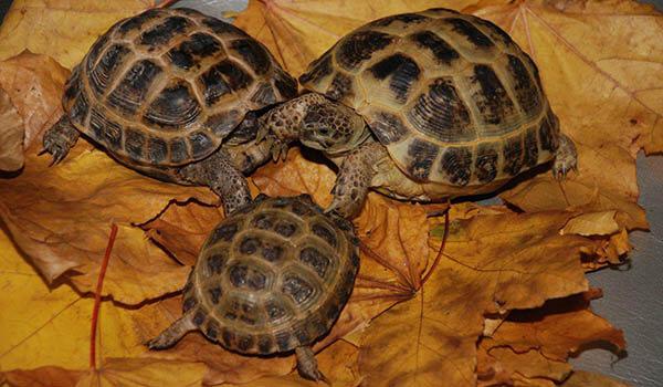 Фото: Детеныш сухопутной черепахи