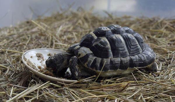Фото: Сухопутная черепаха из Красной книги