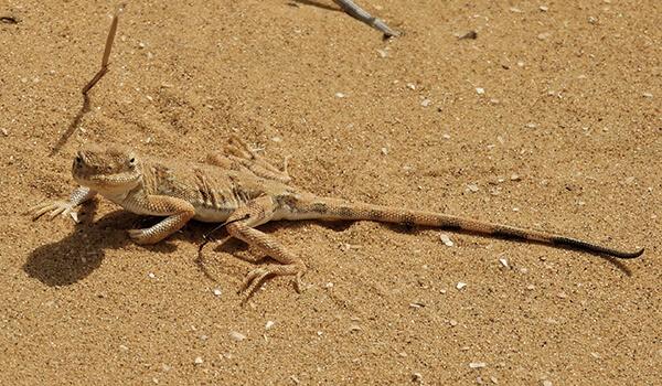 Фото: Вертихвостка в природе