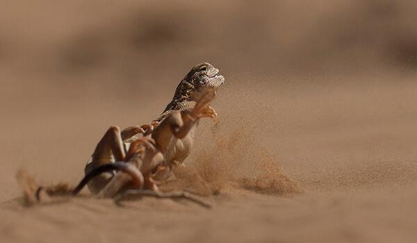 Фото: Как выглядит вертихвостка