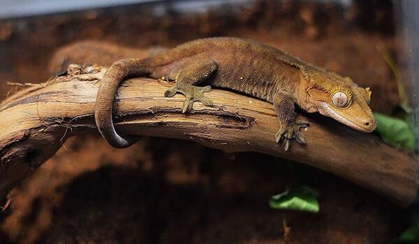 Фото: Как выглядит бананоед