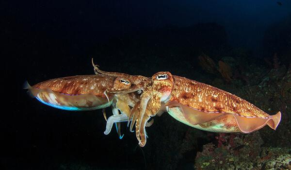 Фото: Каракатица