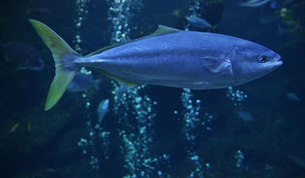Фото: Лакедра под водой