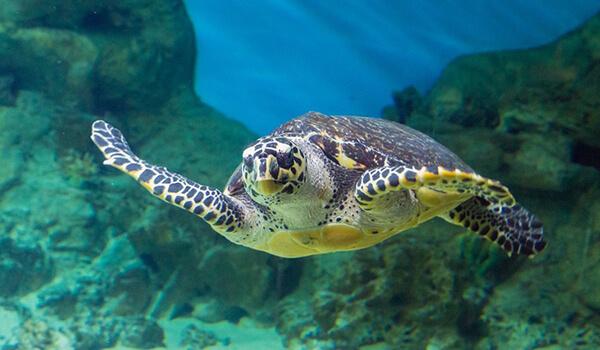 Фото: Большая морская черепаха