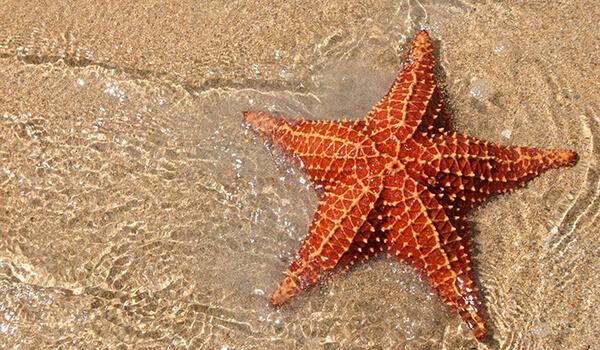 Фото: Морская звезда в море