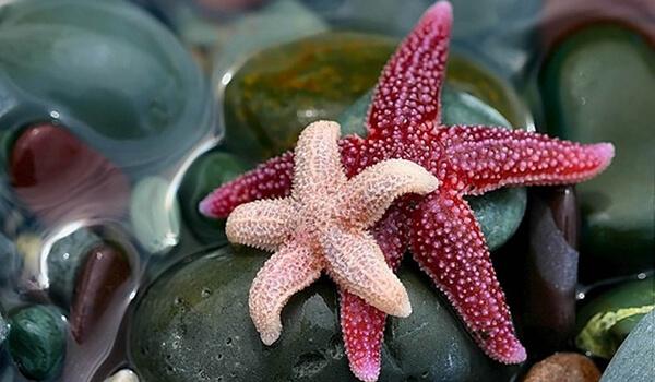 Фото: Маленькая морская звезда