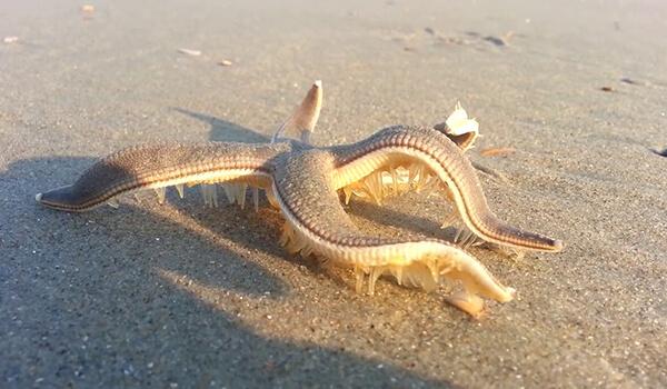 Фото: Морская звезда на пляже