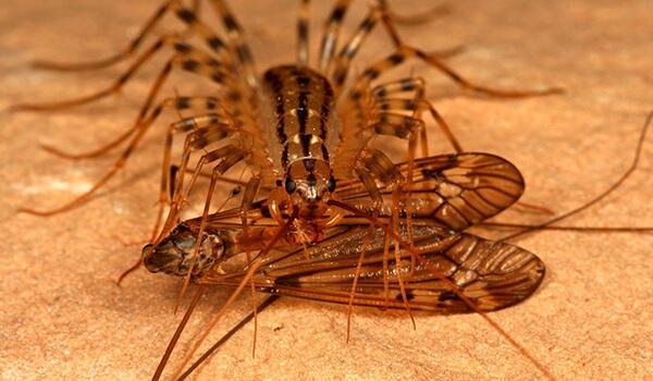 Фото: Насекомое мухоловка